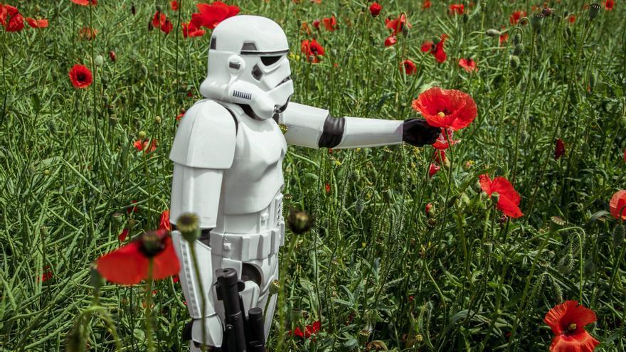 Un Stormtrooper de la Guerra de las Galaxias oliendo una flor (o intentándolo)