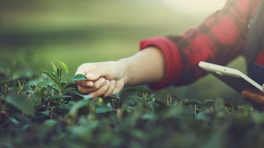 Sostenibilidad, tecnología y consumo bajo demanda, el futuro de la alimentación y la restauración