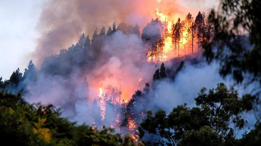 Incendio en Valleseco (Gran Canaria) en el verano de 2019.