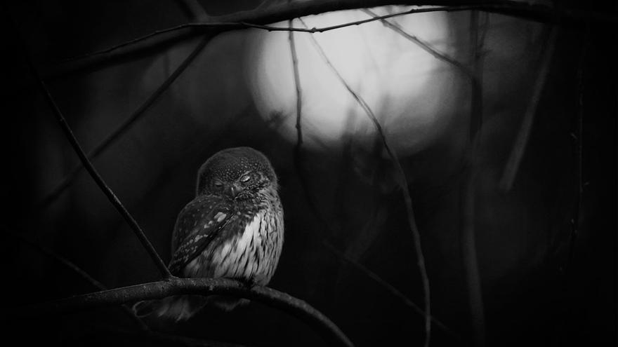 C:\fakepath\© Mats-Andersson_Wildlife Photographer of the year, Black and white winner.jpg