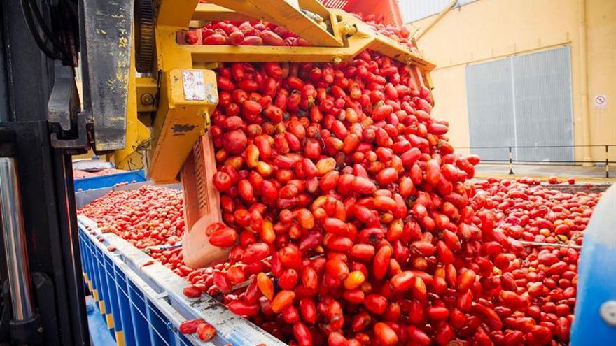 La Tomatina 2.0 dona 14.000 kilos de tomate a familias en riesgo de exclusión