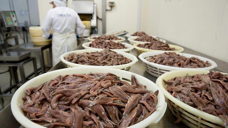 A la rica anchoa del Pleistoceno