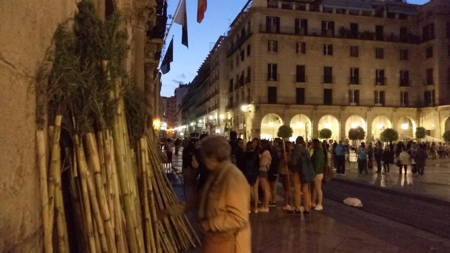 Recogida de las tradicionales cañas con romero a las puertas del Ayuntamiento de Alicante