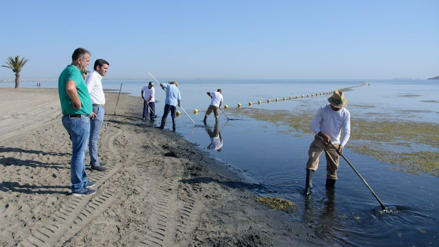 Imagen de las tareas de retirada de la ova de la superficie del agua en el entorno del club náutico de Los Urrutias