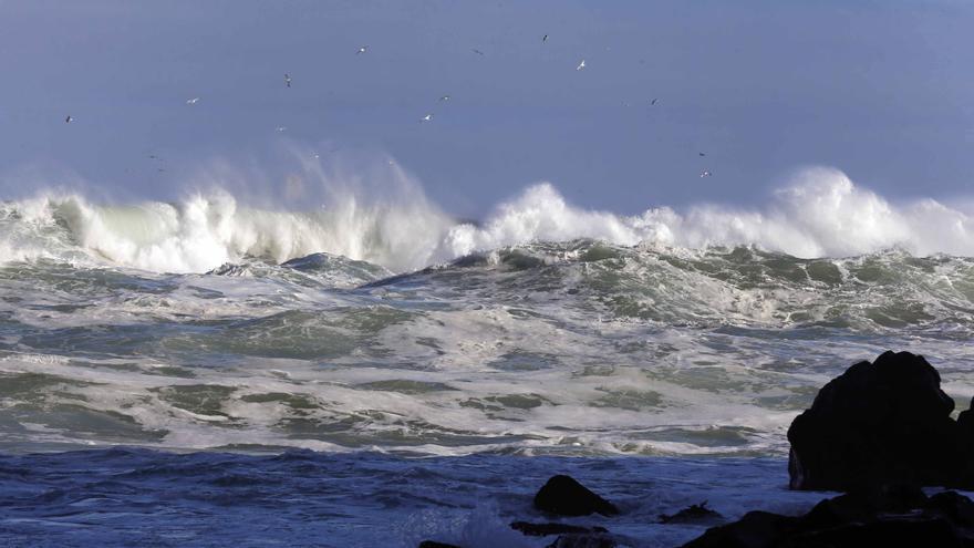 Proponen analizar microorganismos para ver el estado ambiental del mar