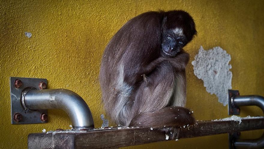 Zoo de Barcelona. Fotografía de Jonás Amadeo Lucas para Igualdad Animal