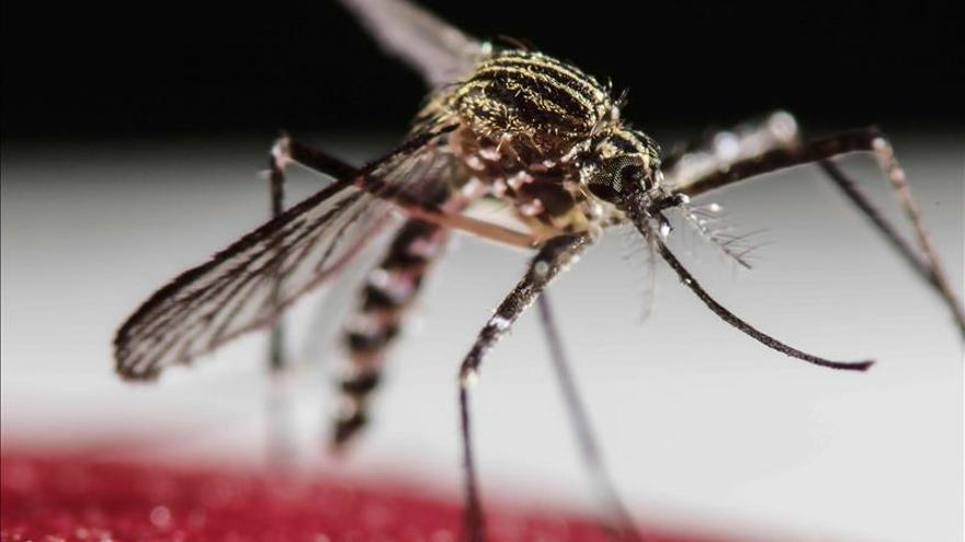 China confirma el primer caso de zika en un hombre que regresó de Venezuela