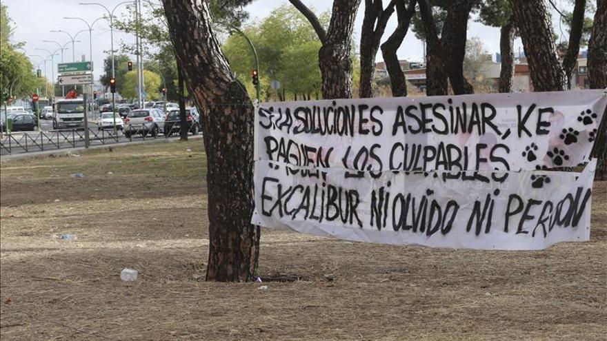 La Fiscalía informa en contra de la querella de Pacma por el sacrificio de Eskálibur
