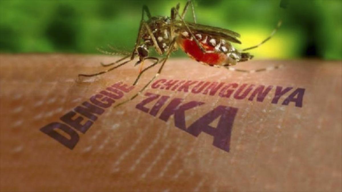 """""""Al igual que el nuevo coronavirus, los virus del dengue y zika tienen en su interior una molécula de ARN que contiene la información genética para multiplicarse una vez que infectan a una célula"""", explicó la Agencia CyTA-Leloir."""