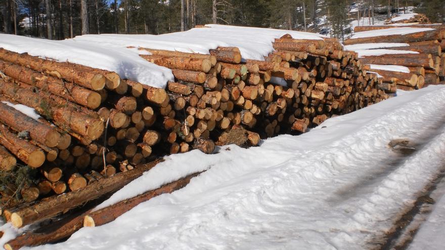 """Ecologistas en Acción reclama explicaciones ante el """"desastre ecológico"""" de la tala de árboles en la Serranía conquense"""