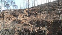 El CEAM ha realizado un informe sobre el estado de la vegetación en el espacio quemado