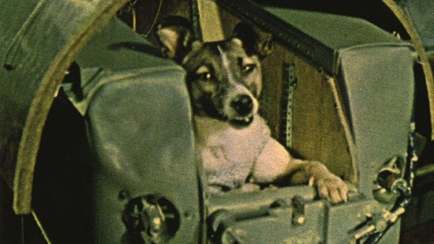 Laika fue capturada en las calles de Moscú y lanzada al espacio en la nave Sputnik 2, donde murió en pocas horas