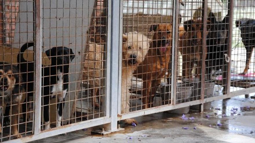 Perros abandonados hacinados en una perrera.