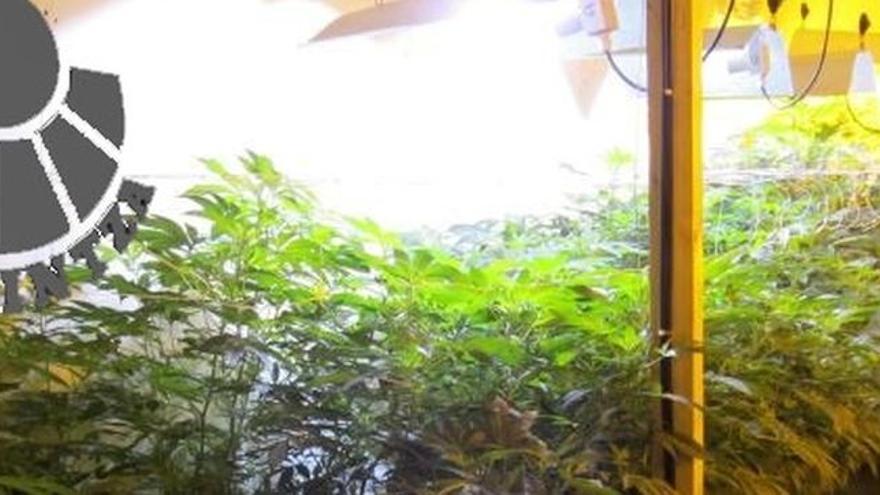Desmantelada una plantación de marihuana en un pabellón de Zaldibar