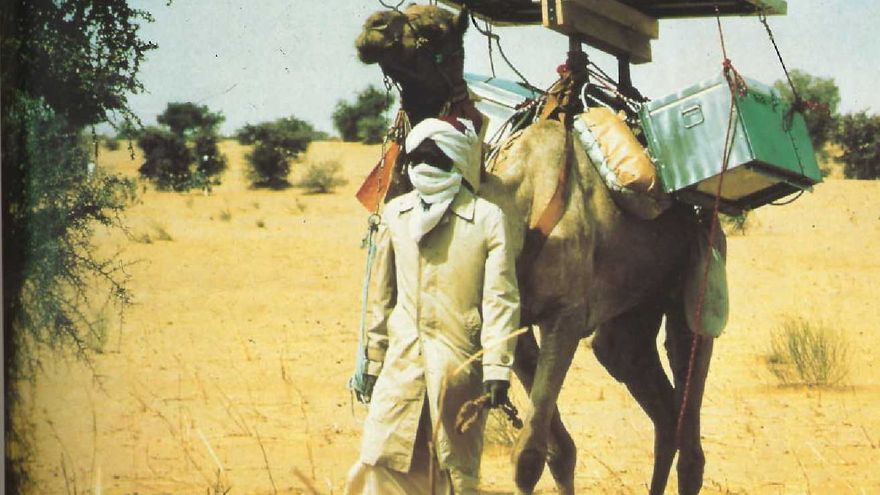 Camello solar