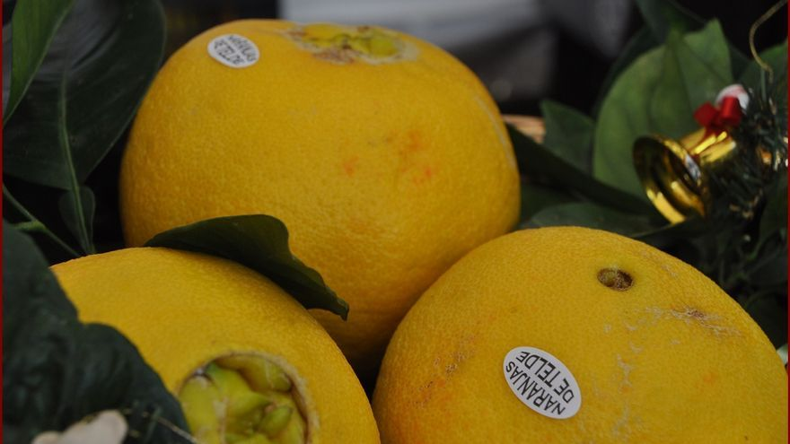 Ejemplares de naranjas de Telde, en una imagen de archivo