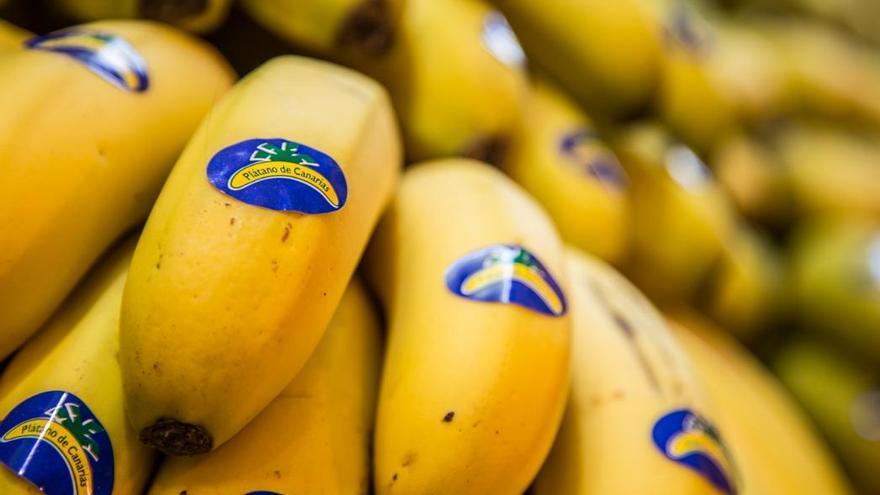 Manillas de plátanos con origen en Canarias, con su identificación