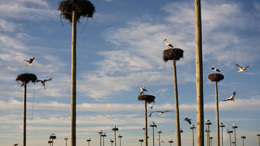 """El arte como """"vector"""" para entender los espacios naturales protegidos"""