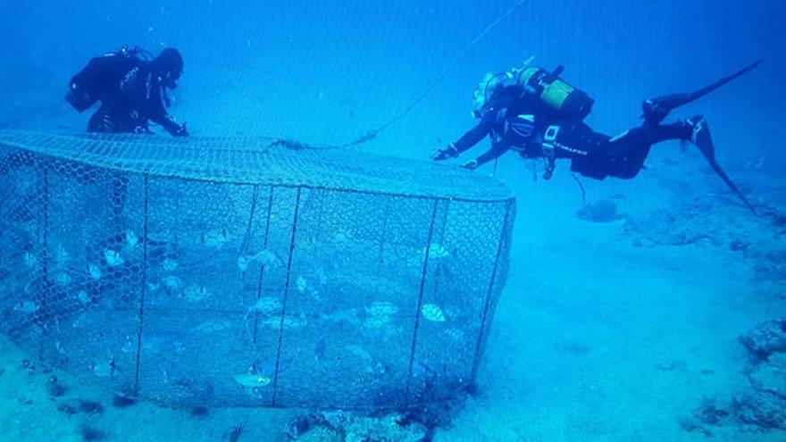 Nasas de pesca ilegales en Arrecife