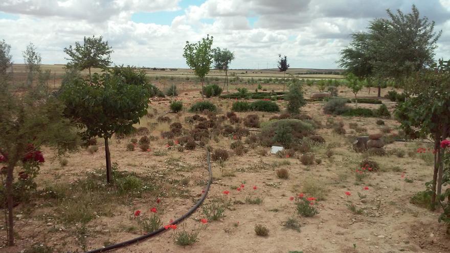Plantación de biodiversidad en finca agraria / Global Nature