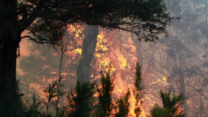 Un total de 16 incendios forestales se mantienen activos en Chile