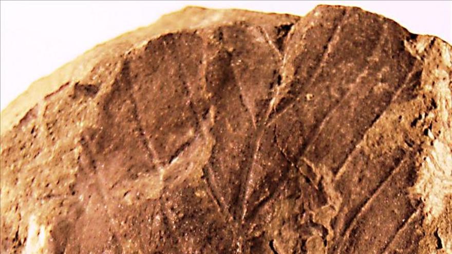 Descubren fósiles de los dinosaurios más australes de América
