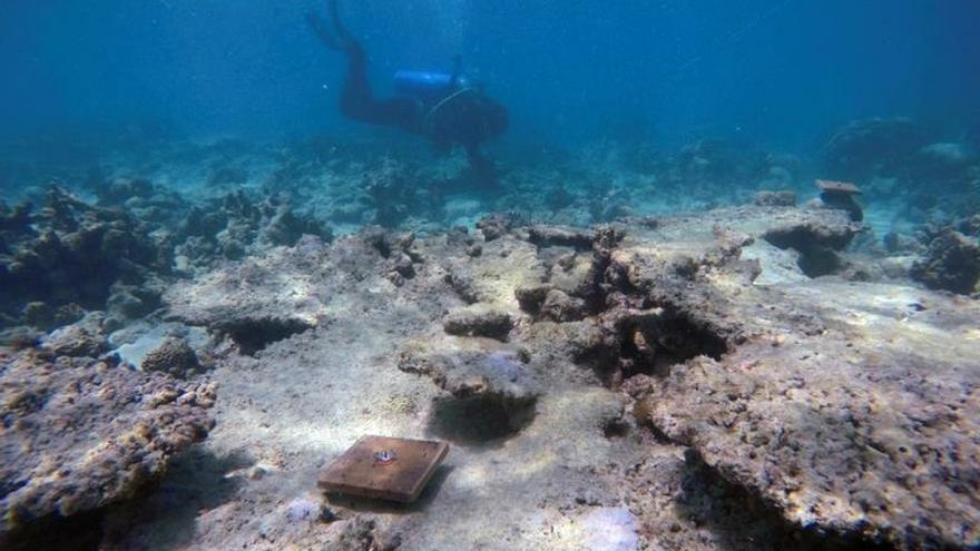 Nuevo blanqueo masivo de corales en la Gran Barrera de Arrecifes de Australia