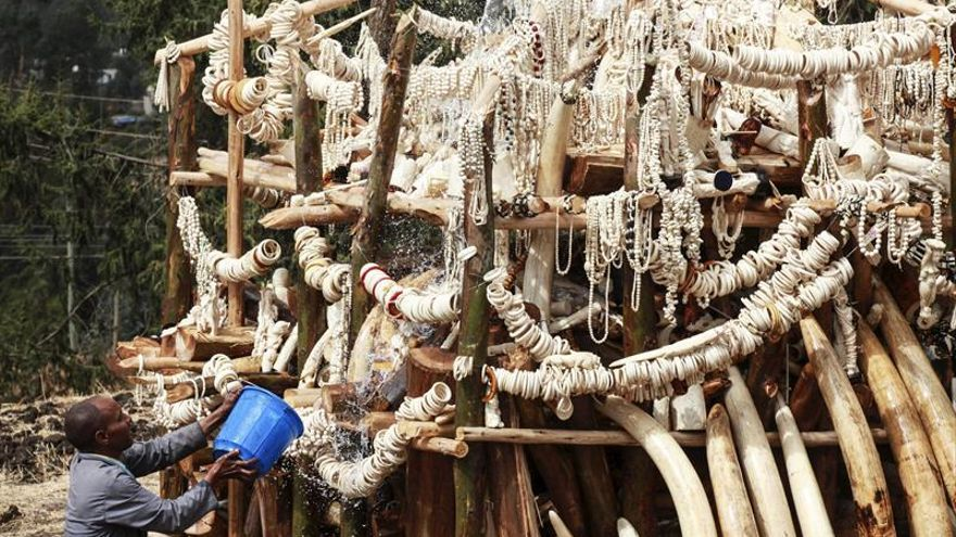 Francia prohíbe el comercio de marfil de elefante y de cuernos de rinoceronte