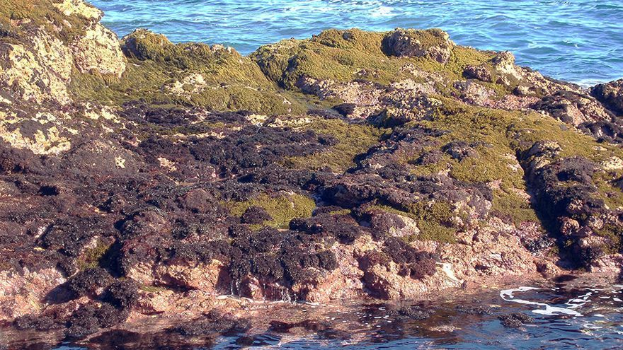 Población de algas Gelidium en Gáldar.