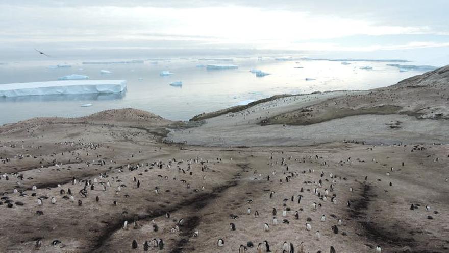 La Antártida, el continente (casi) intacto.