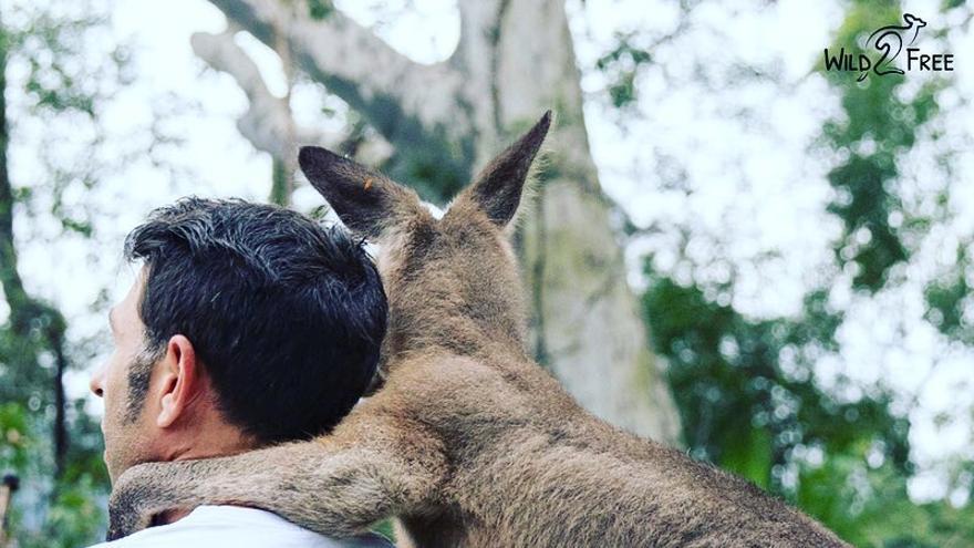 Un activista con un canguro rescatado en la organización Wild2Free