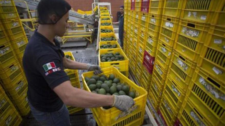Aguacate y carne de res, dos casos de éxito exportador abrazados por el TLCAN