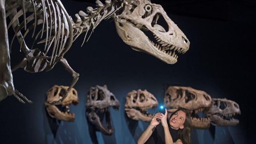 El esqueleto Scotty llega a Escocia para acercar el pasado de los dinosaurios
