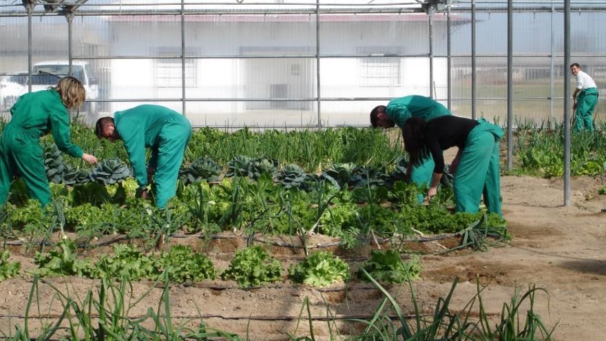 Concesión de incentivos agroindustriales para el desarrollo de productos agrícolas
