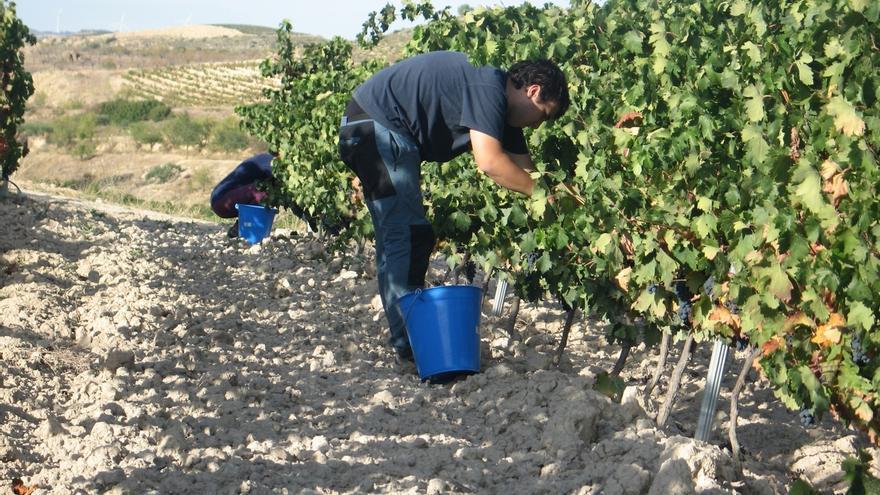 El cambio climático podría provocar que el vino Rioja tenga menos color y acidez, si no hay adaptación de la viticultura