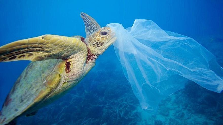 Plásticos en el Océano