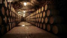 'De la tierra a la boca', ruta por viñedos de 30 años en Valdepeñas