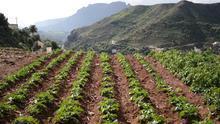 Gran Canaria destina 100.000 para facilitar la adquisición de material a los agricultores