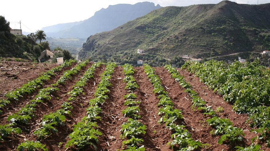Terreno agrícola.