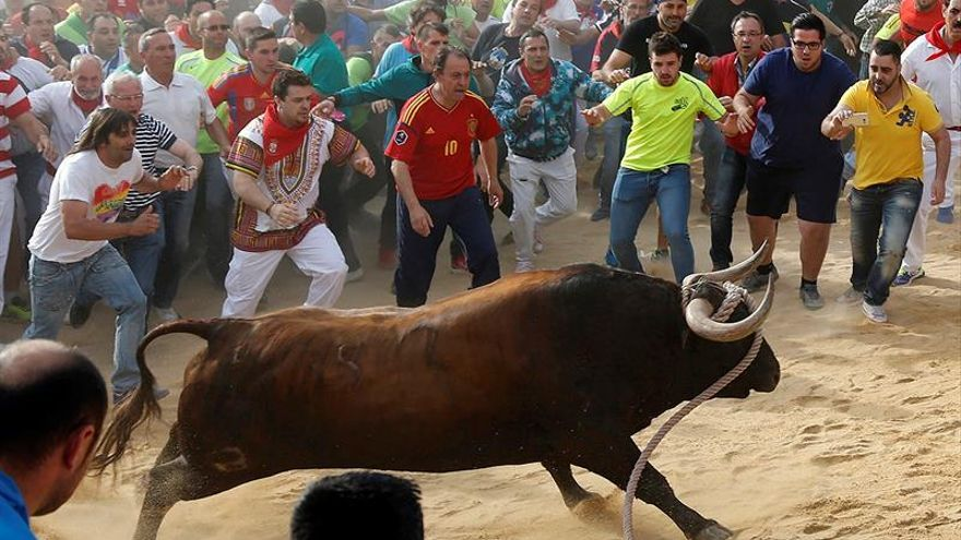 Animalistas denuncian el toro enmaromado de las peñas de Benavente (Zamora)