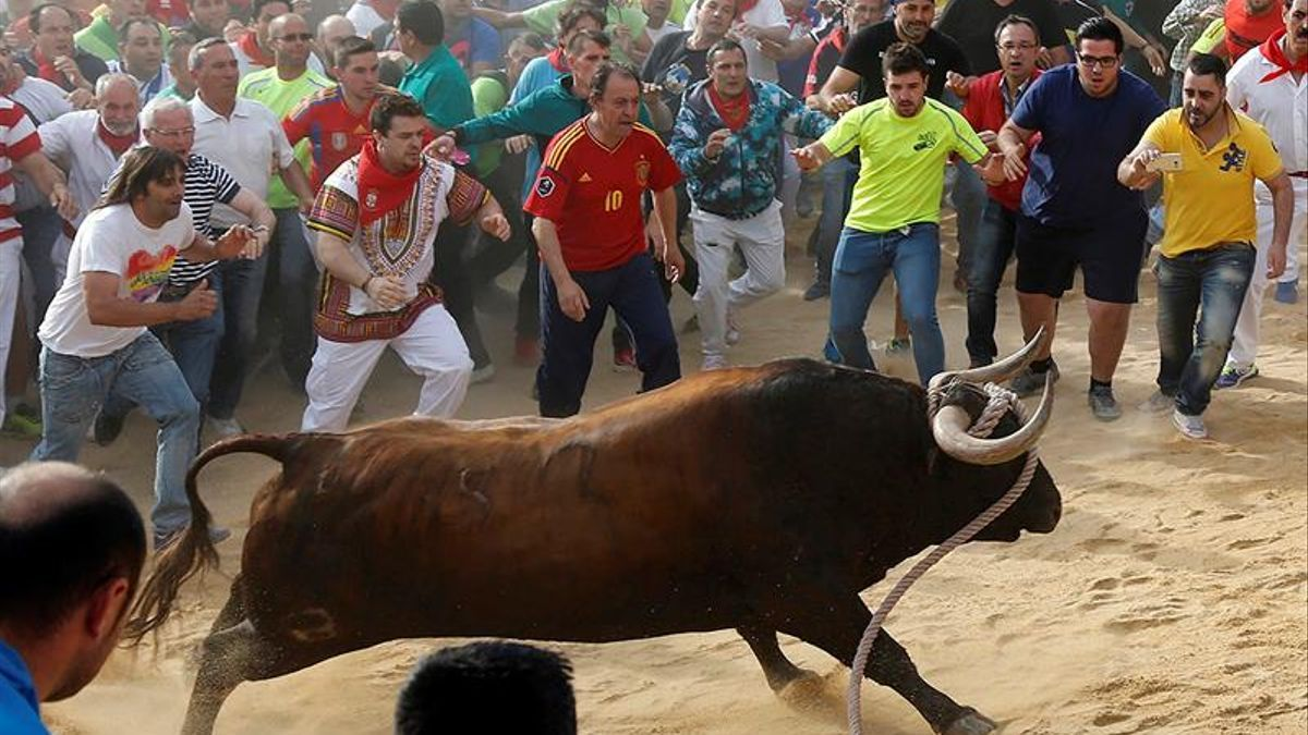 Celebración del toro enmaromado de Benavente (Zamora)
