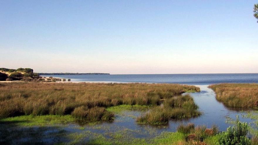 """WWF alerta a los europarlamentarios que visitan Doñana sobre la situación """"crítica"""" del espacio"""