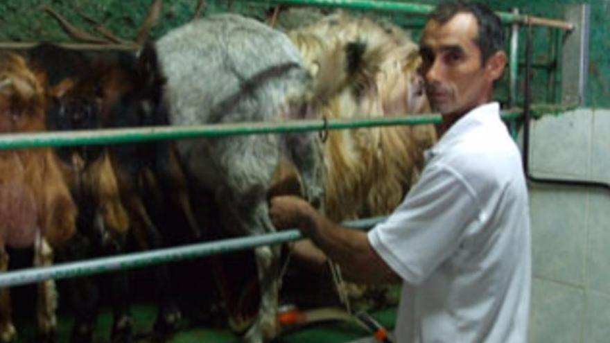 Explotación de quesos Las Cuevas. Foto: CONSEJO REGULADOR DEL QUESO.