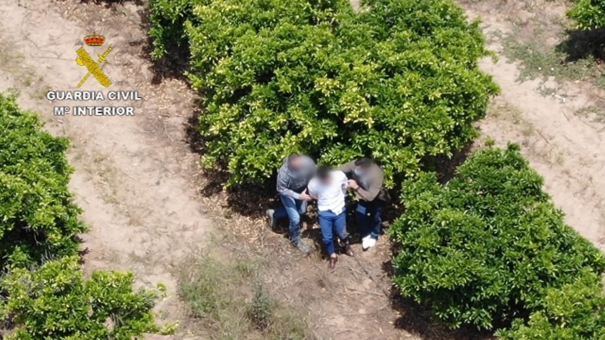 El fugitivo fue acorralado en un naranjal por el que intentó escapar.