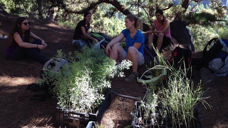 En imagen, cuatro jóvenes del grupo de voluntarios que participan en el plan de conservación de la flora La Caldera.