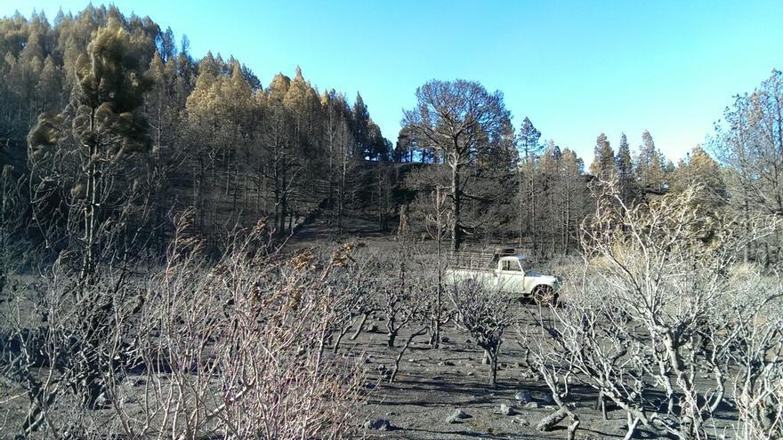 En la imagen, una zona afectada por el pasado incendio.