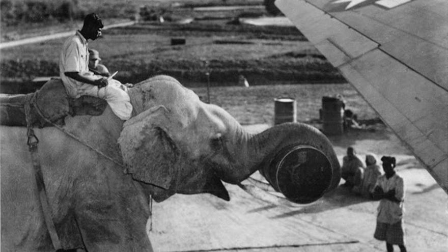 Un elefante hindú carga suministros en aviones C-46 durante la Segunda Guerra Mundial
