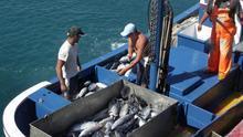 Eurodiputados piden a la CE apoyo financiero a las pesquerías de las regiones ultraperiféricas