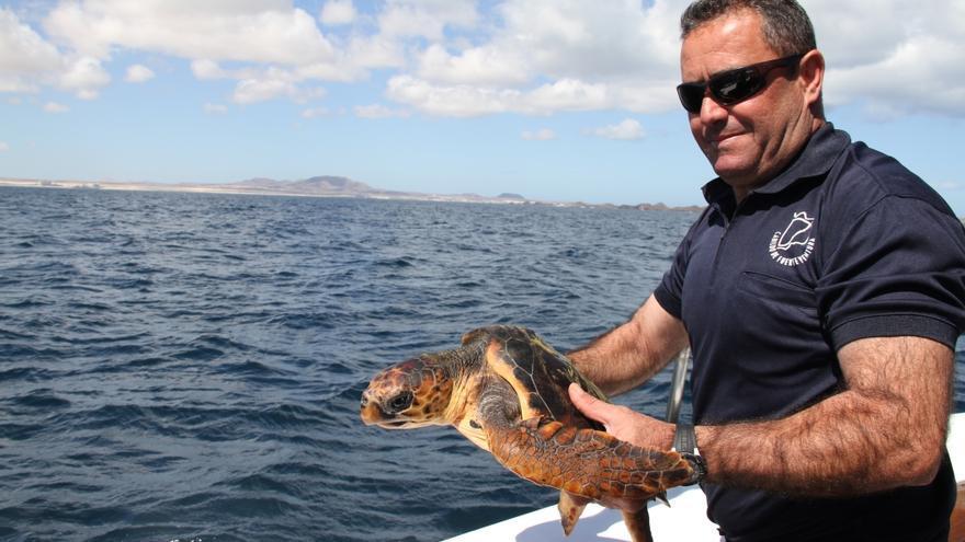 Suelta de tortugas en Lobos