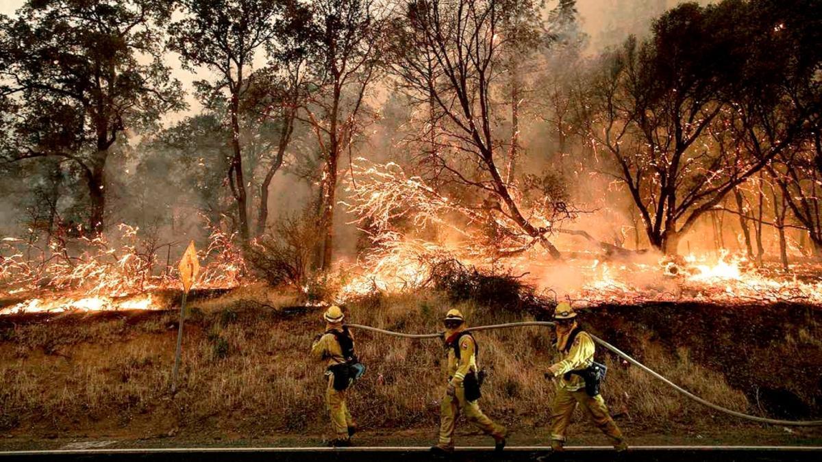 Los incendios en las costas oeste de EEUU y Canadá ponen en jaque la flora y la fauna de la zona.